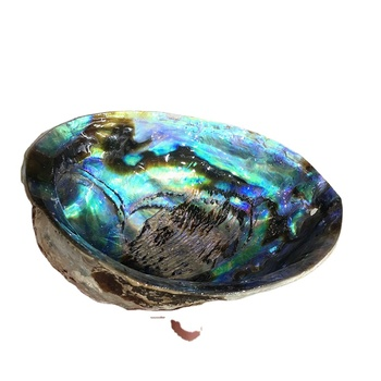 High quality hot sale Rainbow sea shells natural raw polished abalone shell for home decoration