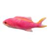 Electric pink fish