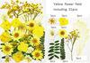 Yellow 31pcs