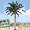 Sliver date palm tree