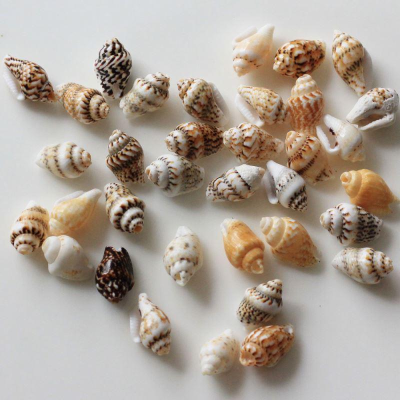 Beautiful Sea Shell 19-29mm Mix 270pcs/bag 500g Cute Craft Decoration Makings DIY Materials Accessories