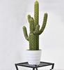 63CM Cactus