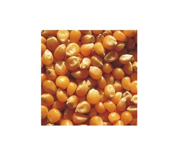 Quality Hot Seller Ukraine Original dried yellow corn price for sale