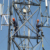3 legged self support tower steel tube  pylons mobile towers telecommunication towers