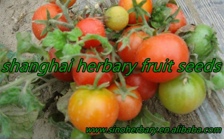 Высококачественные Семена овощей F1, гибридные семена томатов для посева