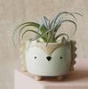 hedgehog flower pot