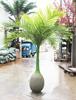 Bottle coconut tree