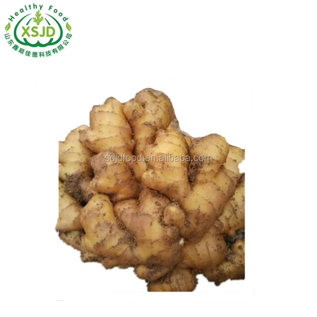China wholesale new Fresh Ginger