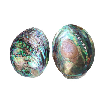 Factory Direct Polished Blue Abalone Shell For Smudge Set Pot Large Stock New Zealand Paua Seashell