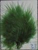 Poussiéreux vert