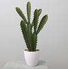 60CM Cactus