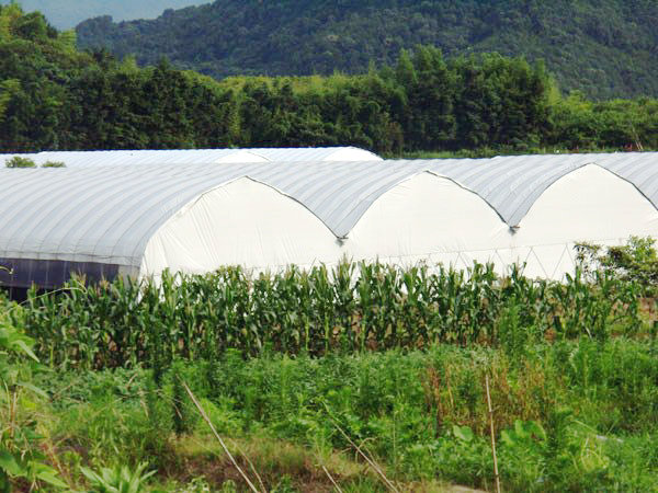 Durable UV protective PE agriculture greenhouse film