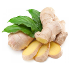 Wholesale 10kg Box Bulk Fresh Ginger 100-250gr