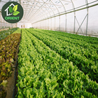 Cheap Portable Plastic Film Greenhouse Crop Cultivation