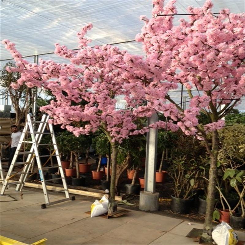 3m 10ft Cherry Blossom Tree Artificial Trees Sale Z08 0711 Buy Fiberglass Cherry Blossom Tree Cheap Artificial Tree Artificial Big Tree Product On Alibaba Com