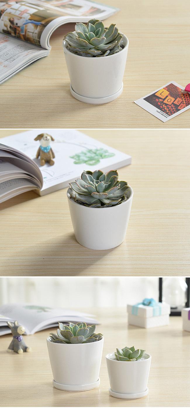 Indoor Decor 3 Inch Round White Mini Ceramic Planter Buy