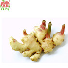2015 wholesale ginger price