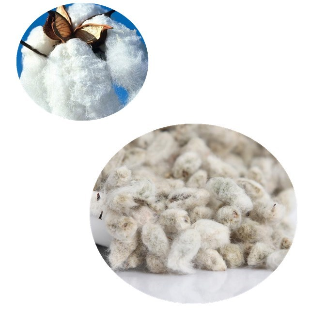 Mian hua 100 % Quality Top Brand F1 hybrid cotton seeds price
