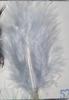 Argent gris