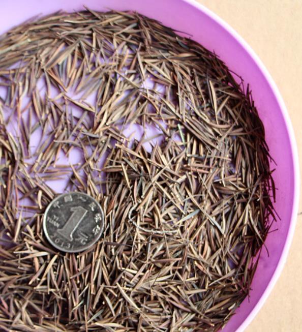 Цветок золотого цвета, семена эндемичного КОСМЕЯ сульфируса