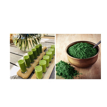 100% pure organic powder halal Kosher Haccp spirulina and chlorella powder