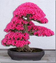 japanese flower seeds 10pcs/lot  wholesale sakura seeds bonsai flower pink Cherry Blossoms flower pots planters