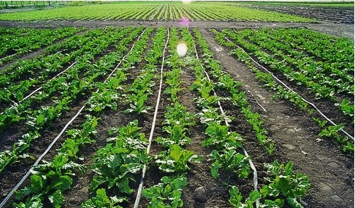 Automatic Agriculture Drip Irrigation Systems For Drip