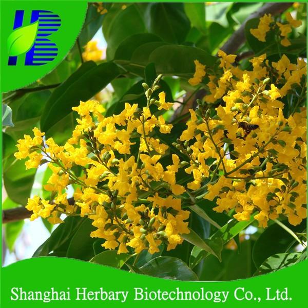 Высококачественные семена сандалового дерева для выращивания
