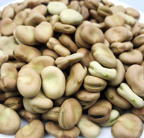 Новый урожай 2019 бобы/фасоны, выбранные H.P.S размер