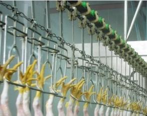 Overhead Conveyor system chicken slaughterhouse