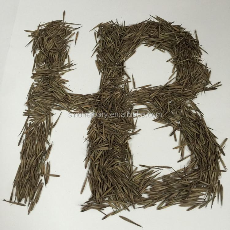 2021 Newest Phyllostachys Heterocycla, Moso Bamboo Seeds