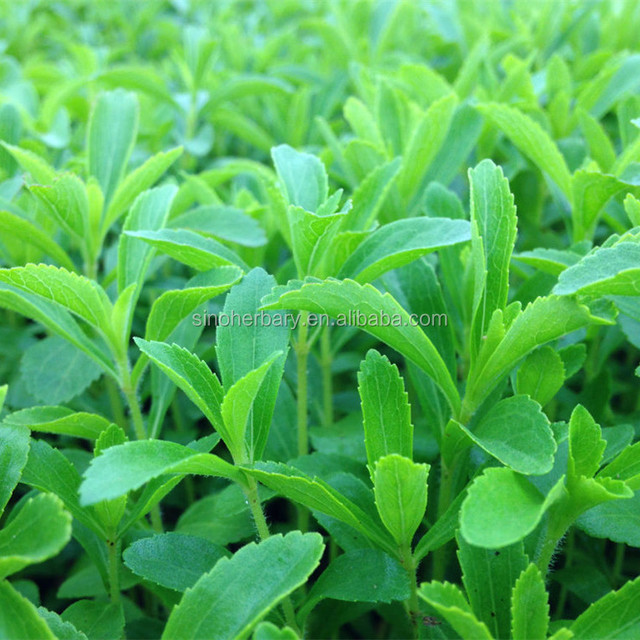 2021 F1 Hybrid Clean Stevia Seeds For Cultivating