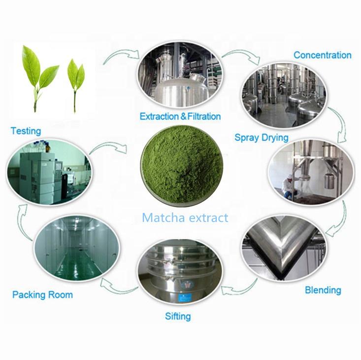 Порошок зеленого чая маття для пищевых добавок, поставка с завода оптом