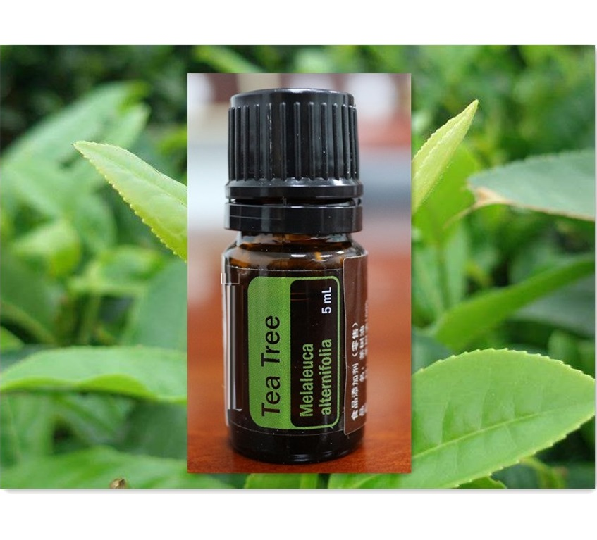 Аромат чайного дерева, духи на основе масла для тела, OEM