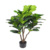 High Simulation FIddle Leaves Artificial Ficus pandurata Hance Tree for Sale