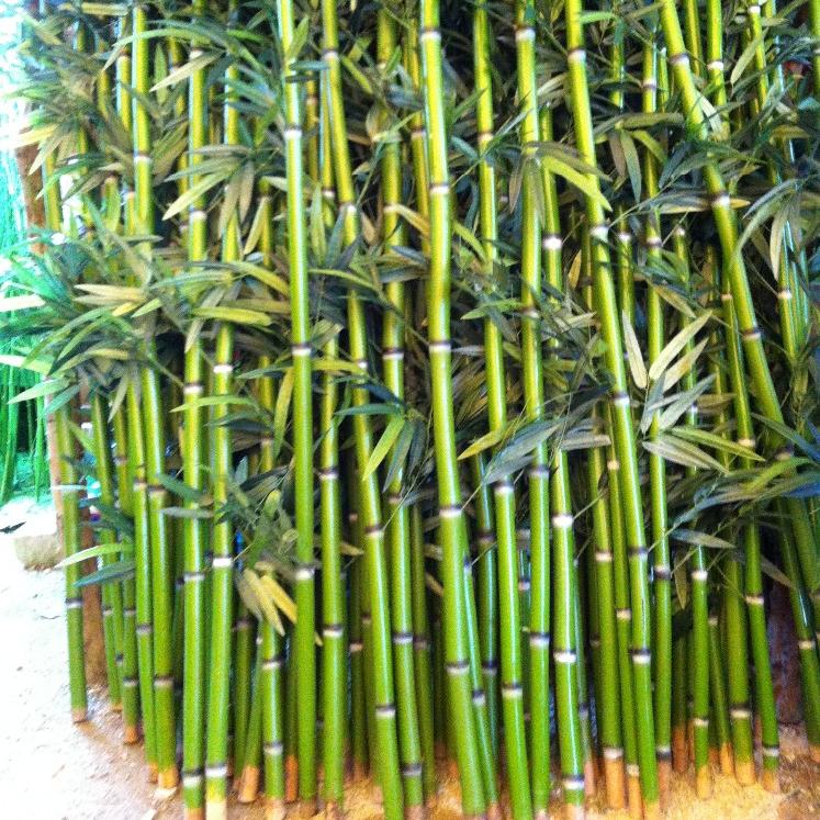Kunstmatige Bamboe Fake Bamboe Bomen Echt Kofferbak Bamboos Lucky Voor Decoratie Buy Outdoor Kunstmatige Bamboe Bamboe Decoratie Eenvoudige Bamboe Sticks Voor Decoratie Product On Alibaba Com