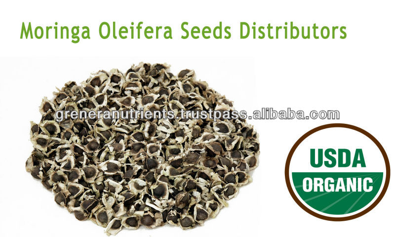 Moringa Oleifera Seeds Distributors