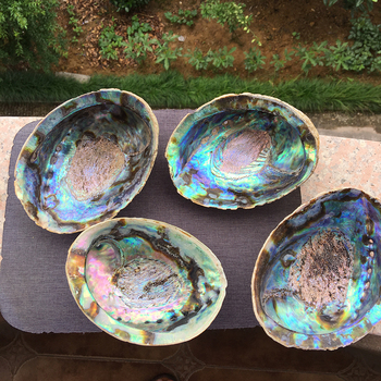 Natural high quality selling colored large abalone polished shells for DIY decoration