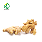 fresh ginger buyers export