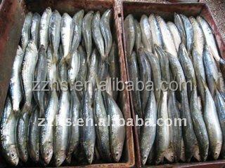 Консервы черный sadine рыба в томатном соусе без хлопья тунец свежей рыбы