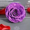 Модель в классическую фиолетовую