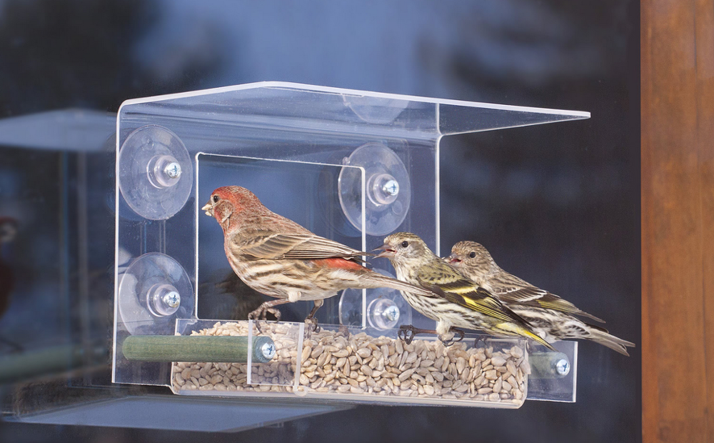 Movable House Shape Clear Acrylic Bird Cages With Standing Bar