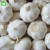 Distributor Wholesale  Fresh Chinese 4p Pure White Garlic