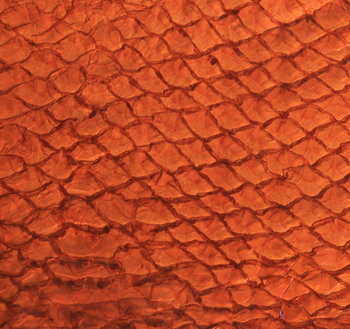 Finished fish skin leather