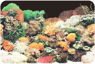Glossy Aquarium Background Poster Fish Tank One Side Coral Rock Landscape Poster Wall Decor Single Sided View Aquarium Decoration Baojie Product Details From Yiwu Baojie Aquarium Equipment Co Ltd On Alibaba Com
