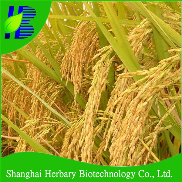 High Germination Rice Seed For Growing
