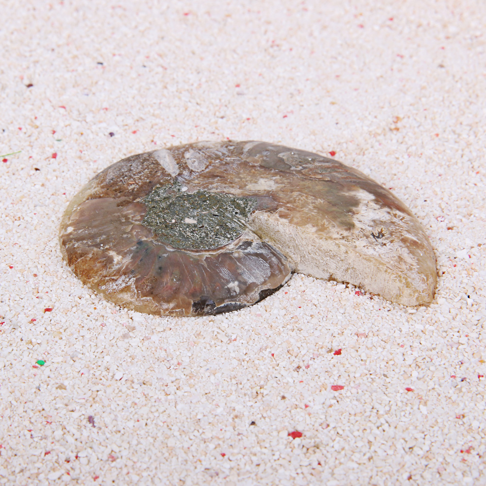 22a8ba80191 2pcs 40-80g Natural Conch Shell Fossil Mineral Specimen Stone DIY ...