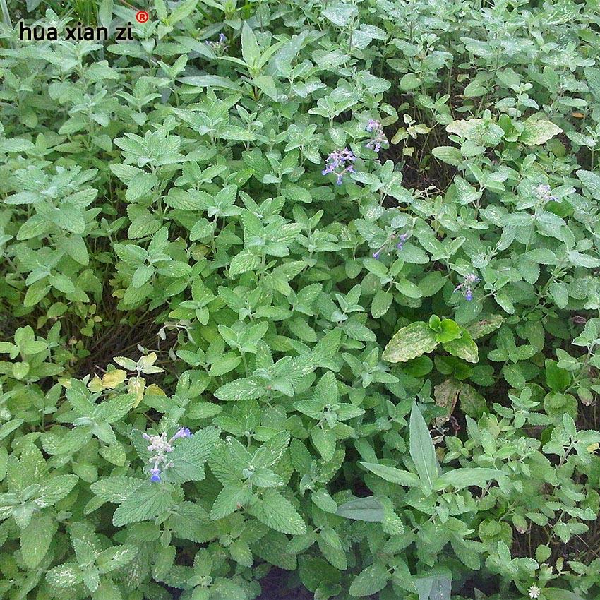 menthe plante promotion achetez des menthe plante promotionnels sur alibaba group. Black Bedroom Furniture Sets. Home Design Ideas