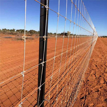 wholesale galvanised field fence for sheep cattle horse deer fencing