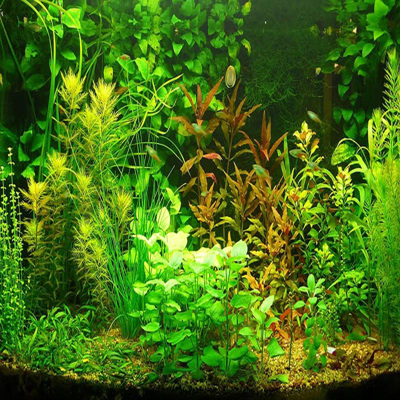 20 kinds Aquarium Grass Seeds Water Aquatic Plant Seeds